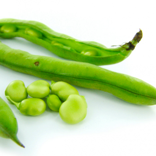 Broad Beans (Fava Beans)