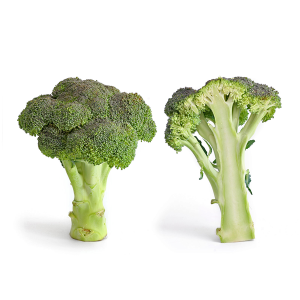 Green Italian Broccoli