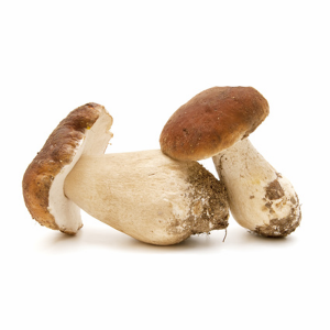 Fresh Italian Porcini Mushrooms