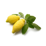 Amalfi Lemon