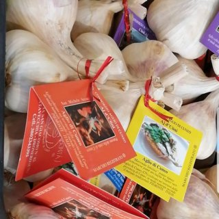 Piedmont Garlic Bundle