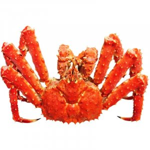 Live Red King Crab 4-5Kg