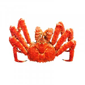 Live Red King Crab 3-3.5Kg