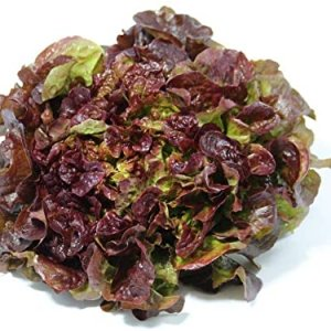 Red Oak Salad - 400gr