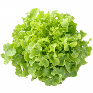 Green Oak Salad - 400gr