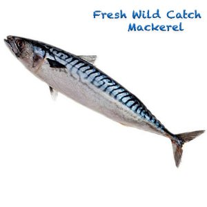 Wild Catch Mackerel