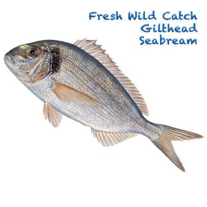 Wild Catch Gilthead Seabream