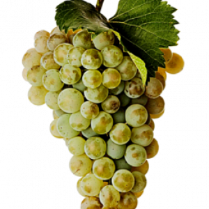 White Moscato Grape