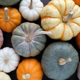 Mix Selection of Pumpkins